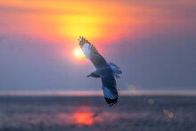 Seagull Flying In The Sky Over The Sea