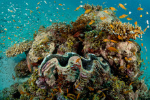Underwater Coral Reef With A Diversity Of Marine Life In The Maldives.