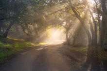 Fog Lifts Along A Dirt Road In The Hills Of Silicon Valley, California