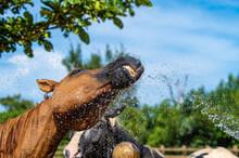 夏の暑い日に水浴びをする馬