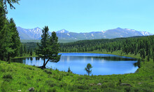 Lake Kidelyu In Altai In A Mountain Valley, Around The Lake There Is A Coniferous Forest And Green Grass, Two Trees In The Foreground, Mountains With Snow-capped Peaks In The Distance
