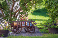 Garden Composition With Wooden Rustic Cart With Bright Flowers In The Yard, Hungary