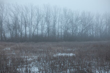 Outdoor Picture Of Wild Autumn Field With Some Snow And Wall Of Naked Trees On Background, Mist Descending On Gloomy Landscape. Changes Of Season. Fall Scenery. Withering Nature. Nobody Around