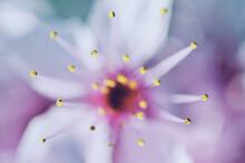 Macro Shot Of Purple Flowering Plant Focused On Stamens And Pistils