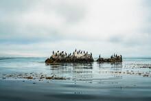 Cormorants On A Cliff Top. Photo Has Taken From Kayak. Pacific Ocean,
