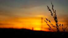 Wheat With Sunset In The Background