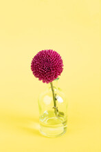 Single Purple Bud In Glass Vase Against Cheerful Yellow Backgrou