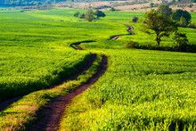 Green Way - A Dirt Road Through The Spring Fields