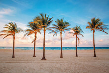 Florida Empty Beach Landscape With Six Palm Trees And Ocean At Sunset.