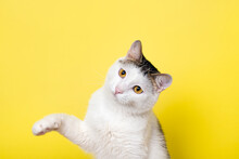 Funny Cat Playing And Cat Catching Something With Its Paw
