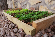 Wooden Greenhouse With Lettuce Plants Growing