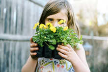 Little Girl Holding Up A Six Pack Of Yellow Pansies In Her Garden