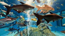 Beautiful Nature Blue Underwater World Inside A Large Aquarium For Many Species Of Freshwater Fish In Thailand