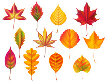 Autumn Leaves. Fallen Leaf, Dry Fall Leafy Litter And Falling October Nature Leaves Isolated Vector Set
