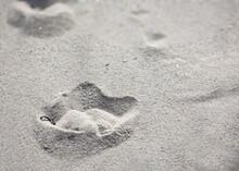 Fußabdrücke Eine Lachmöwe Im Feinen Sand Der Dünen An Der Ostsee.