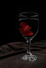 Full Red Betta Fish Swimming Underwater In A Wine Glass Macro Stock Photo
