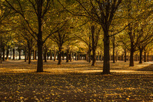 Lines Of Trees With Sun Rays And Leaves On The Floor During Fall In Kimberly South Africa