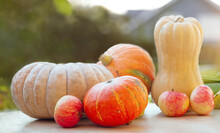 A Composition Of Ripe Organic Corn Cobs And Various Pumpkins And Pears On The Background Of The Garden . The Concept Of Harvesting, Growing, Gardening. Health, Vegan Food