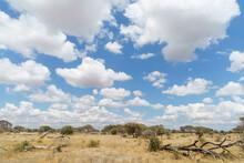 Magnificent View Of Wildlife Under The Beautiful Blue Sky Of The Savanna (Tarangire National Park, Tanzania)