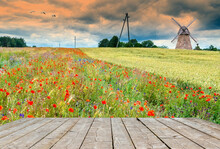 Countryside Spring Field And Old Windmill On Horizon. Concept Of Ecological Tourism In Baltic Countries