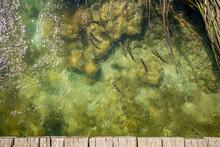 Shoal Of Fish Swim In The Shallow Lake Water, Upward View