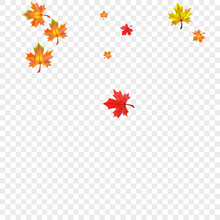Green Foliage Background Transparent Vector. Leaf Down Texture. Brown Isolated Floral. Ground Leaves Frame.