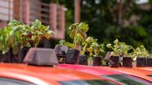 Taxis In Bangkok Grow Food