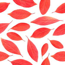 Pattern From An Autumn Red Leaf Of A Tree.