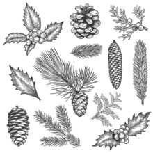 Sketch Xmas Branch. Christmas Plants Fir Branches, Pine Cones And Holly Leaves With Berries, Boxwood, Botanical Vintage Engraving Vector Set
