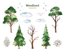Cute Woodland Collection.Watercolor Set With Evergreen,tree,bushes,animal Footprints. Perfect For Education,  Baby Shower,room Decor,template Cards,books,baby Clothes,t-shirt Prints.