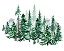 Spruce In Mountains Forest Watercolor Illustration. Template For Decorating Designs And Illustrations.