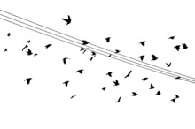 Birds On Wires. Vector Illustration