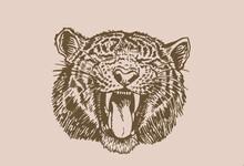 Graphical Vintage Portrait Of Tiger,sepia Background,vector Element