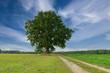 Samotne drzewo na tle błękitnego, lekko zachmurzonego nieba.