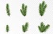 Set of vector fir branches. Spruce branches png, pine, spruce. Christmas decorations.