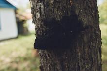 Mushroom On Tree Nature Countryside Forest