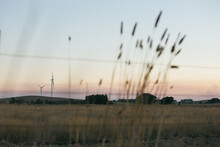 Wind Turbine In The Countryside At Dusk With Fauna Foreground Details