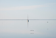 Birds Flying Low Over The Bay Towards Boat, And Flat Horizon