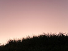 Seaside Grass Silhouetted Against A Purple Evening Sky