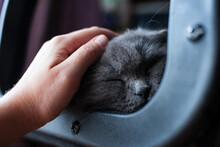 A Hand Strokes A Sleeping Gray Cat