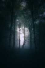 Scary Forest Between Light And Shadow