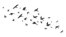 Flying Bird. Free Birds Flock In Flight Black Silhouettes. Tattoo Image, Freedom Symbol Wildlife Vector Illustration
