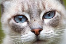 Close Up Portrait Of A Cat