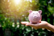 Woman Hand Holding Piggy Bank With Sunrise, Saving, Charity,  Fundrasing Community Care, Superannuation, Financial Crisis Concept