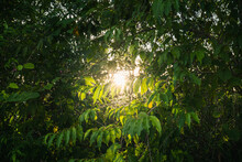 Sunlight Penetrates Through The Trees In The Forest Down To Reveal A Hole, Making The Darkness Bright.