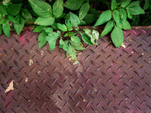 The Checkered Plate Used For The Playground Is Overgrown With Wild Plants On It