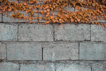 Backdrop Of Gray Concrete Blocks Entwined With Ivy With Yellow Leaves In Autumn - Stone Wall