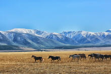 Altai Mountain Landscape, Panorama Autumn Landscape Background, Fall Nature View