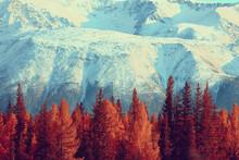 Autumn Forest Mountains Panorama, Landscape Trees, Nature Yellow Season