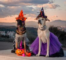 Perros Disfrazados Para Halloween